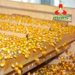 Насіння кукурудзи МАЇС за спеціальною ціною
