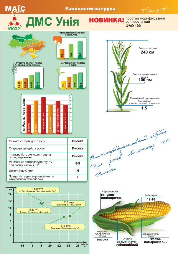 Насіння гібриду кукурудзи ДМ Унія (220)