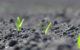 Актуальні питання сівби кукурудзи
